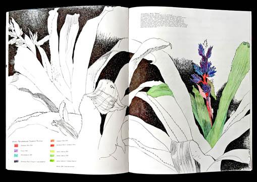 Jauneth-Skinner-©-2018-aechmea-bromeliad-blue-tango-botanical-art-illustration