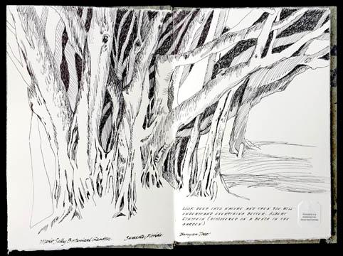 Jauneth-Skinner-©-2019-ficus-microcarpa-banyan-tree-botanical-art-illustration