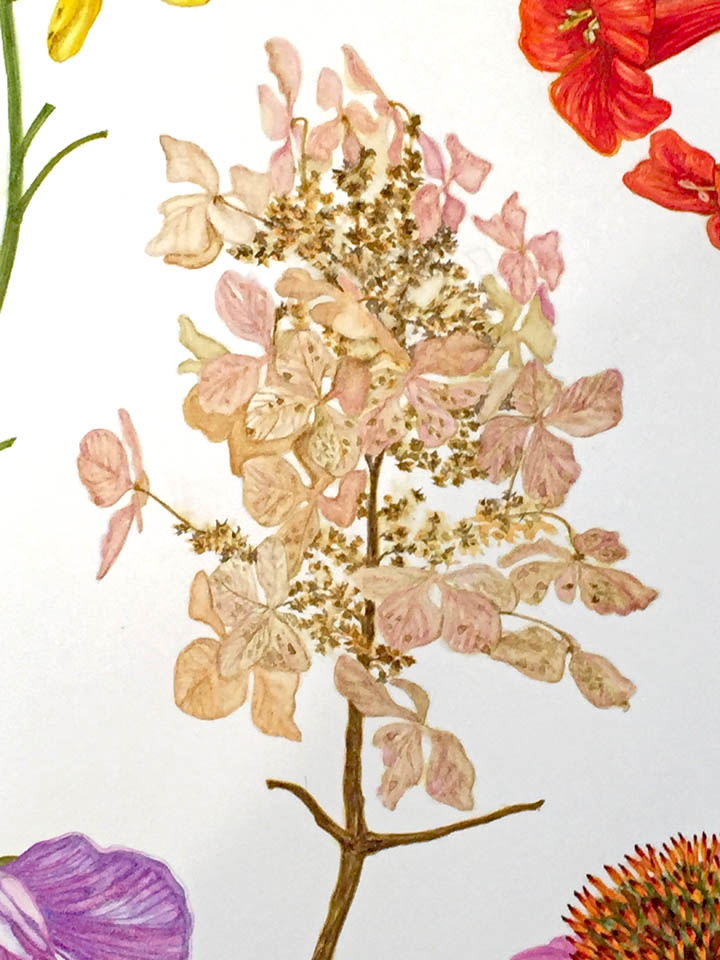 jauneth-skinner-©-oak-leaf-hydrangea-watercolor-painting-botanical-art-illustration-detail