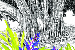jauneth-skinner-©-2019-Marie-Selby-botanical-gardens-poster-botanical-art-illustration