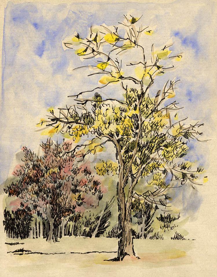 jauneth-skinner-©-autunno-intaglio-w-hand-coloring-landscape-tree