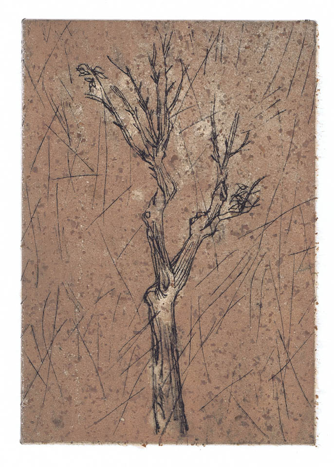 jauneth-skinner-©-ligustro-a-corciano-intaglio-etching-tree-italy