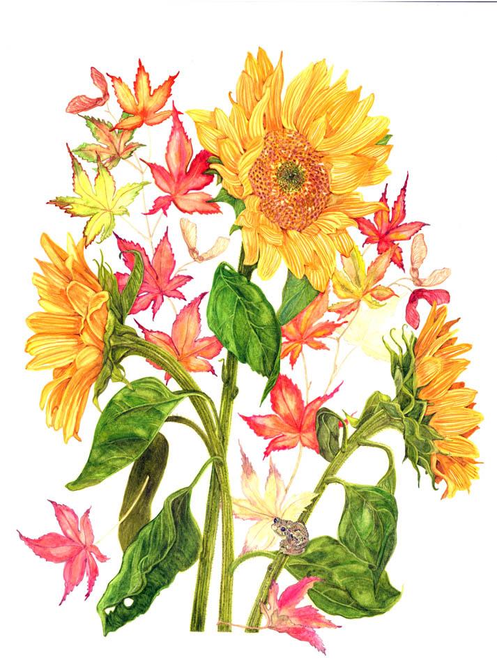 jauneth-skinner-©-2019-autumn-composition-sunflower-botanical-art-illustration