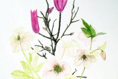 jauneth-skinner-©-2019-spring-composition-lenten-rose-botanical-art-illustration
